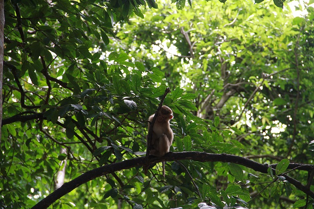 обезьянка что посмотреть на пхукете